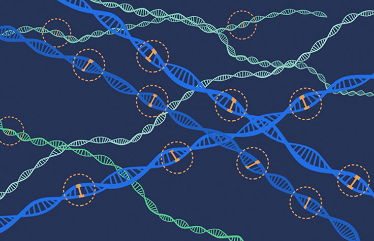 Polygenic Risk Scores Could Become Useful Tools in the Physician's...
