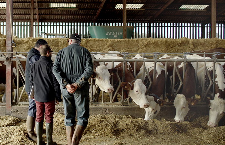 Selective Breeding is Helping French Dairy Farmers Manage Breeding and Herd Renewal
