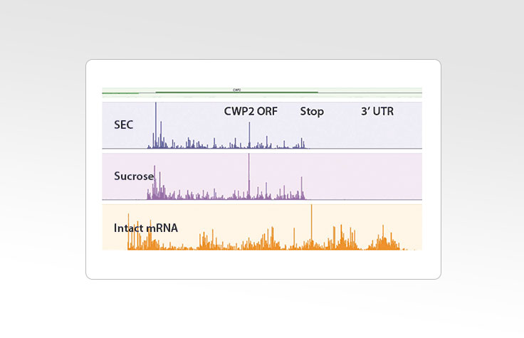 Generating Sequencing Libraries for Ribosome Profiling