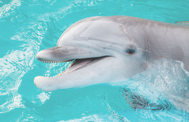 Building a Dolphin Genome Assembly
